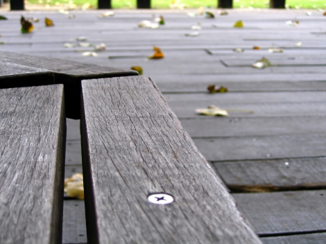 Empty Bench and Falling Leaves