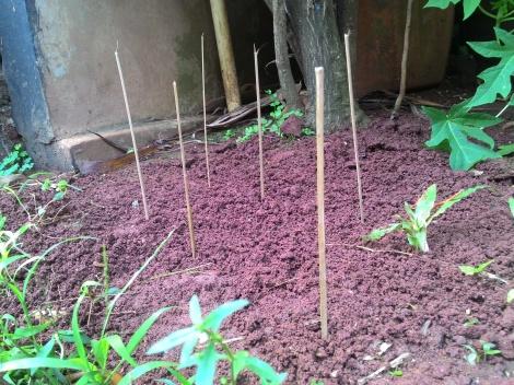 Foto ilustrasi TKP (Tempat Kejadian Pemberakan) dan contoh penancapan biting anti tahi kucing di tanah.