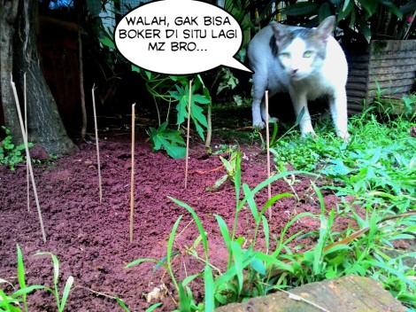 Kucing korban ranjau biting diperankan oleh model. Tersangka si kucing arab palsu kabur entah kemana :D